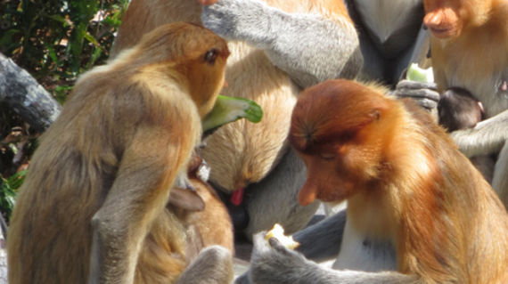 Visit and feed these unique monkeys up close