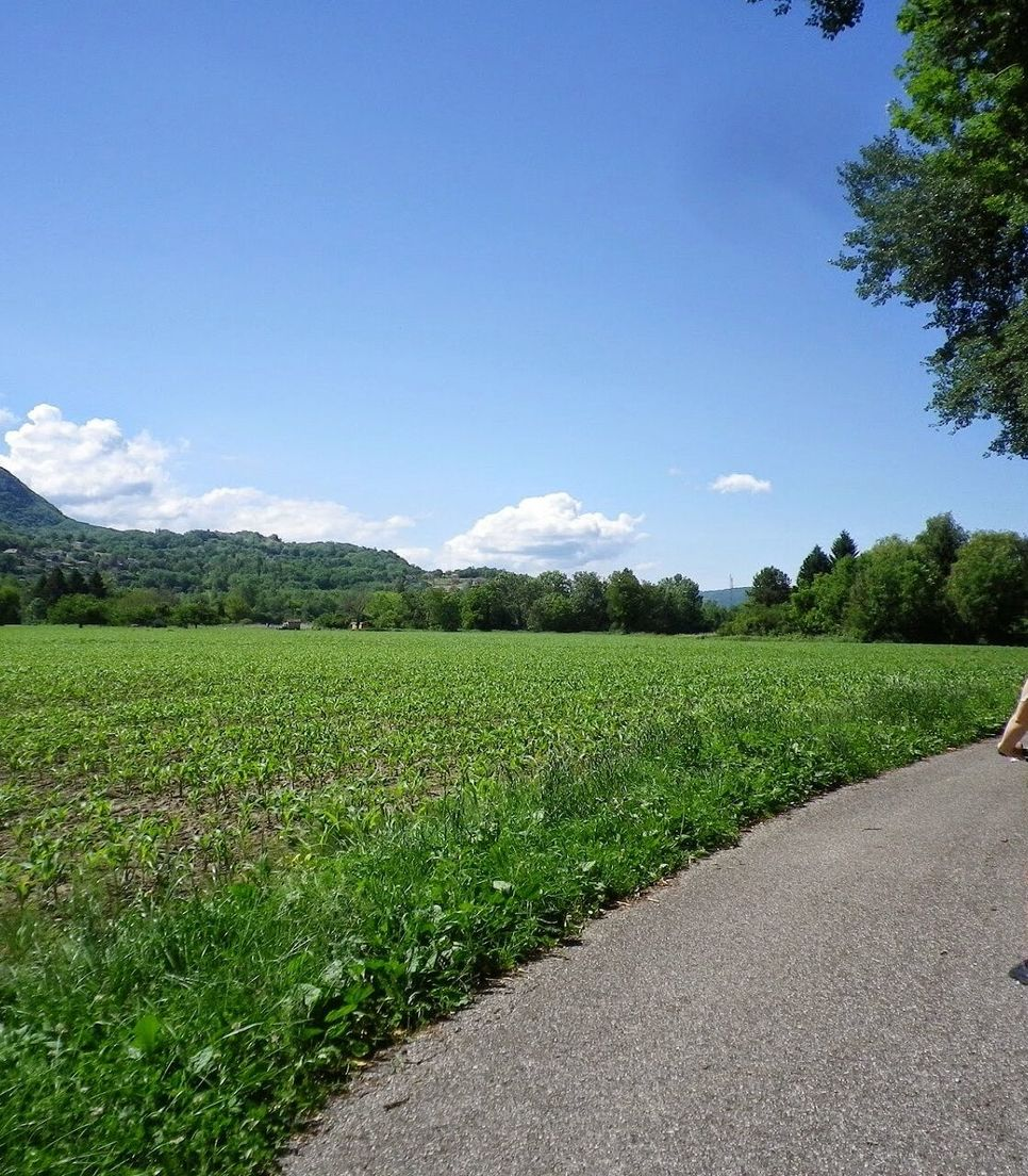 Pedal through the verdant scenery of the region