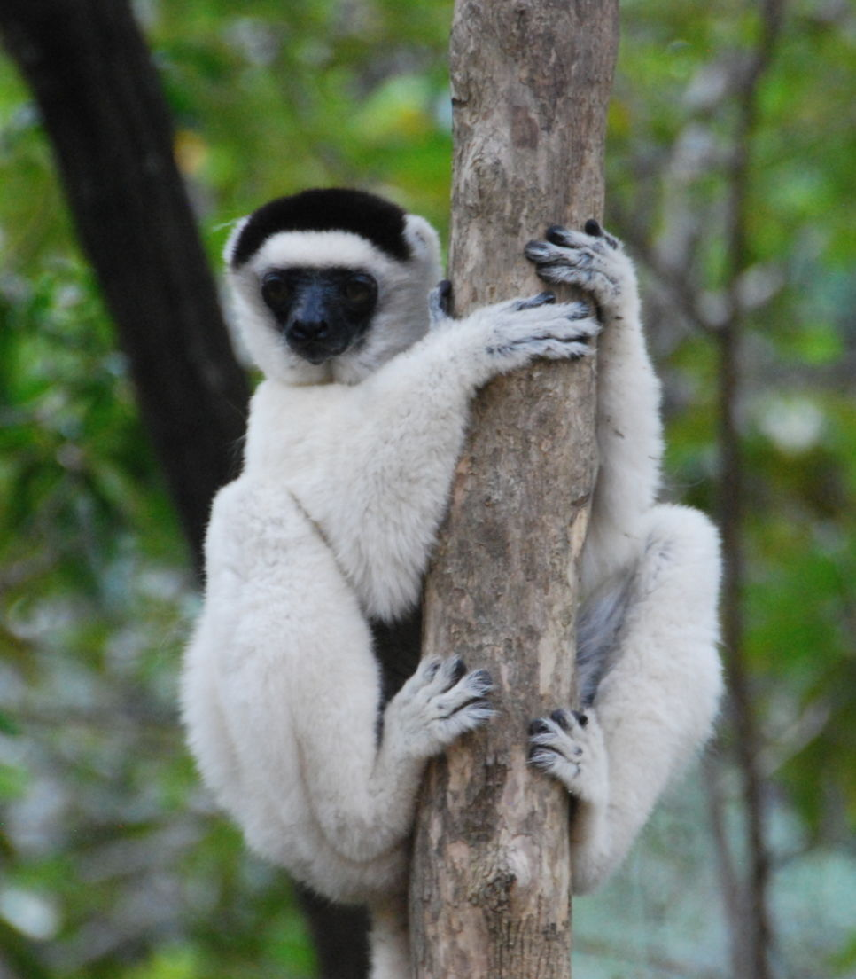 With over 100 species in Madagascar, get your fill of these fascinating animal