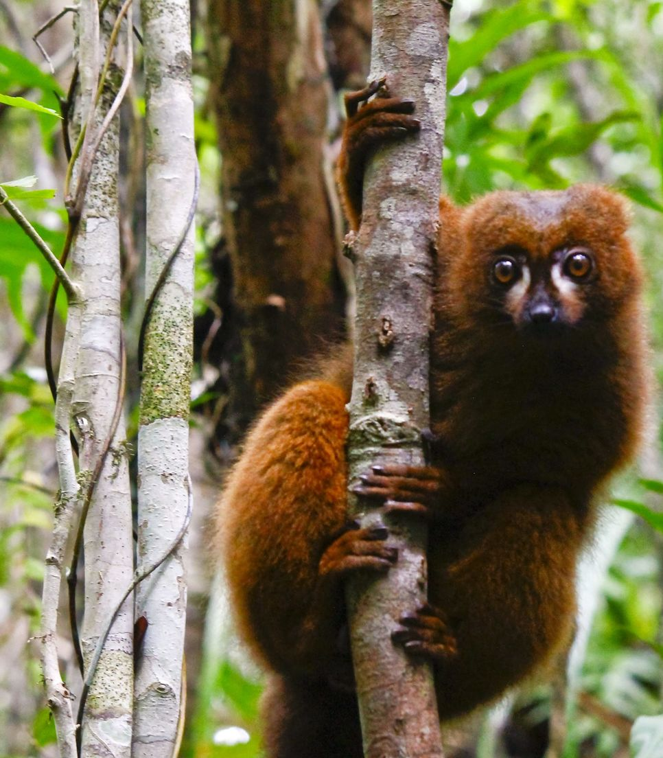 Discover the magical wildlife of Madagascar during the tour