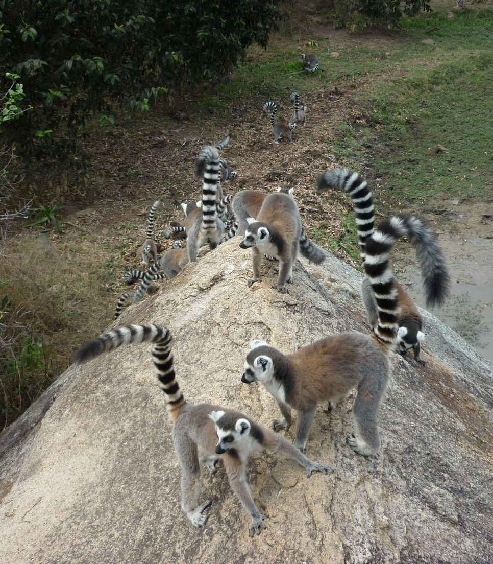 Discover Madagascar by bike