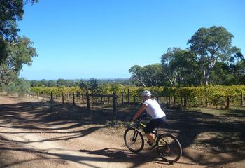 McLaren Vale Mountain Biking and Wine Day