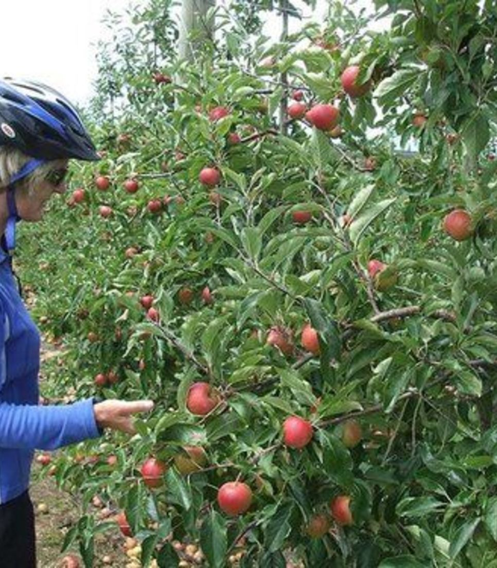 Get stuck into some lovely cycling and enjoy the fruits of your labor
