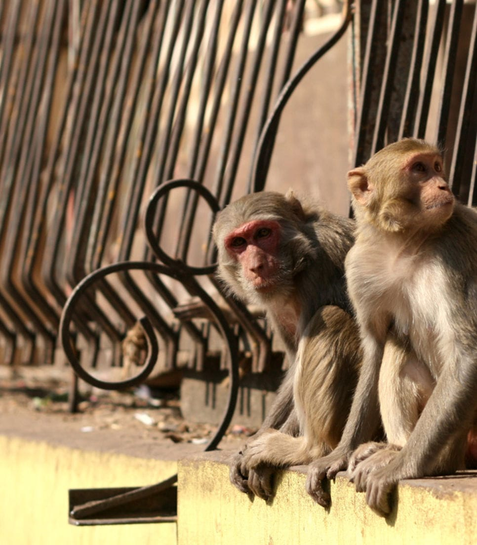 Watch out for the beautiful temples and clever monkeys
