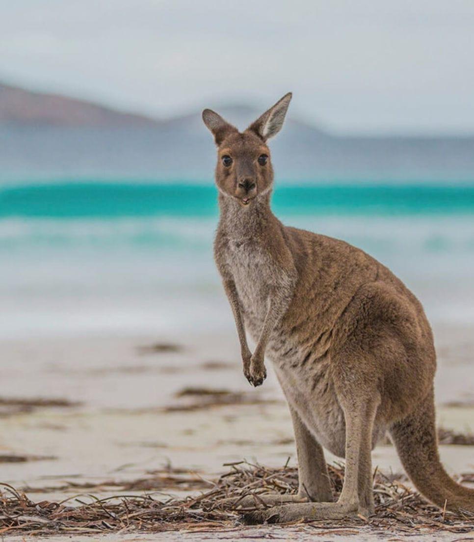 Discover the magic of Australia