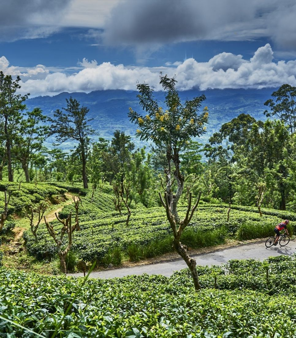 After riding through plantations, sample the teas yourself