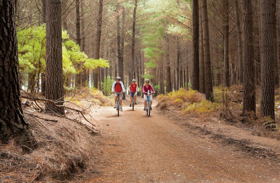 Premium Great Taste Trail Cycling Tour