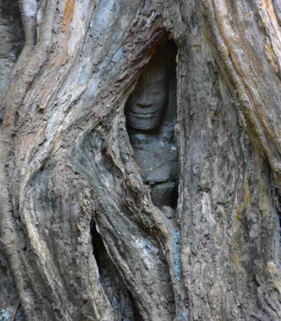 Look for these peculiar statues engulfed by massive trees