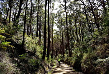 Five Gippsland Rail Trails