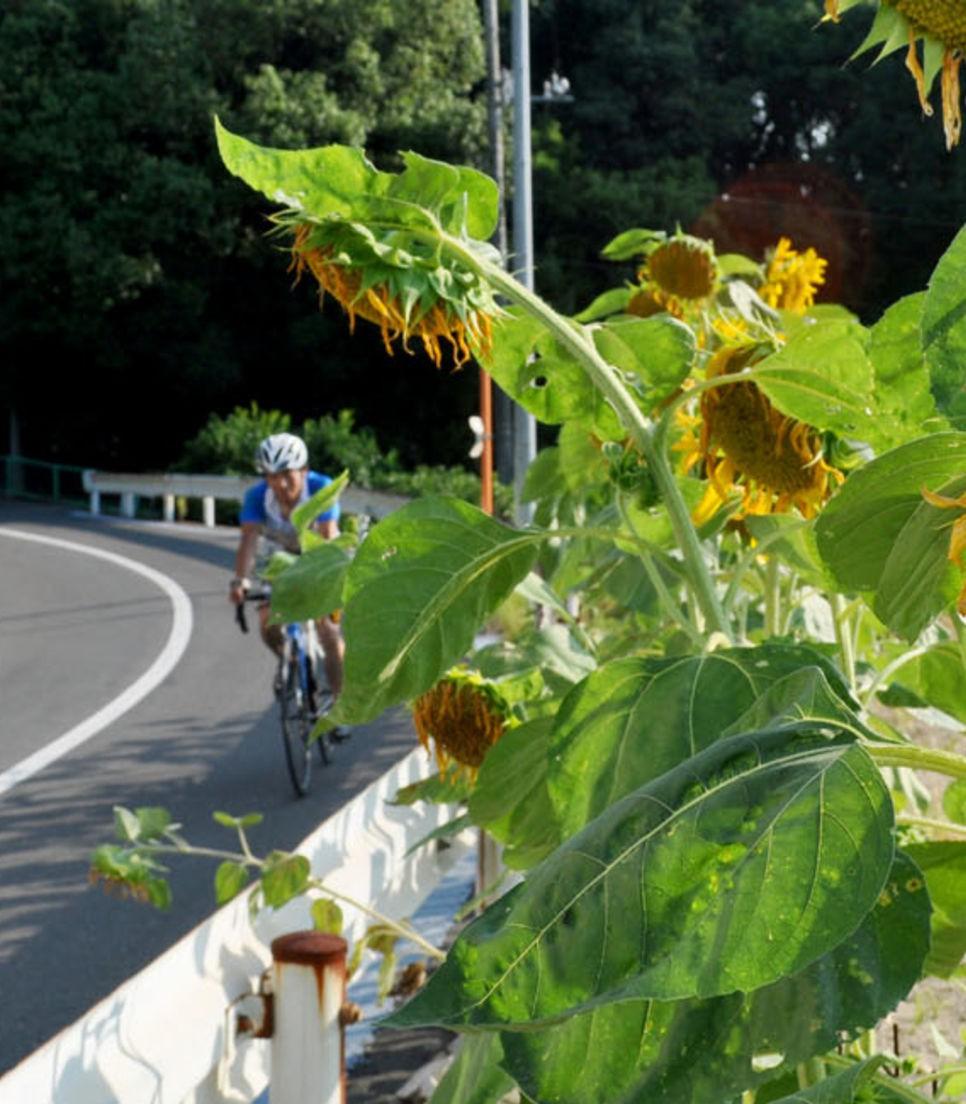 Embrace the glorious descents and appreciate the vibrant roadside