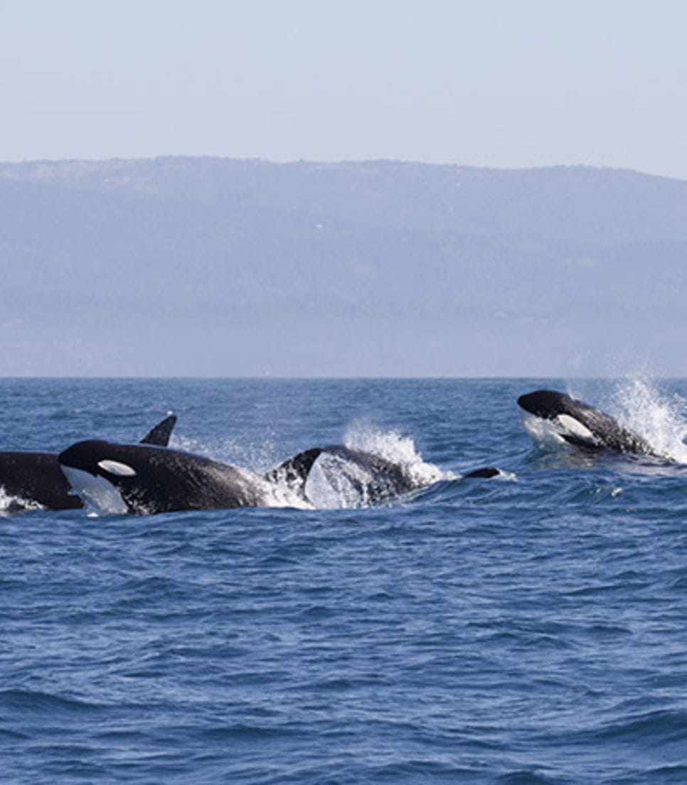 Incredible sights await as you explore the San Juan Islands by land and sea