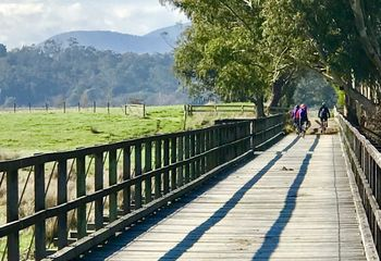 Yarra Valley Bike Tour: Lilydale to Warburton Rail Trail Day Trip