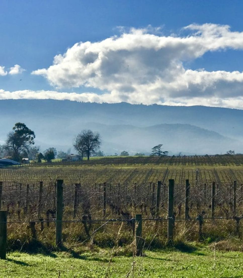 Discover Victoria's beauty on an enjoyable cycle day tour