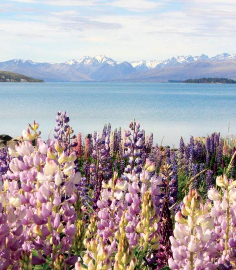 Cycle the lakes and mountains of NZ's south
