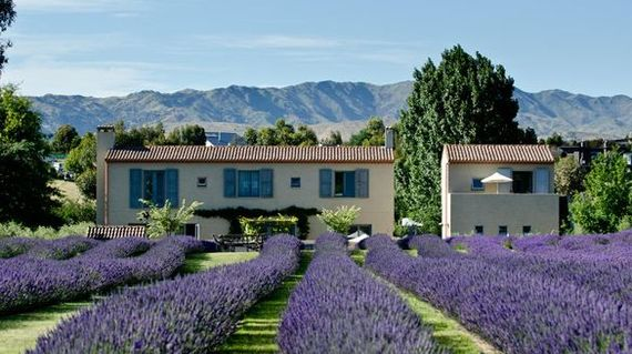 Rest in French country style accommodations that's surrounded by fields of lavender and olives