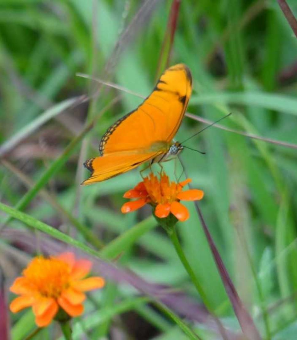Try and spot this vibrant butterfly and other incredible natural sights as you go
