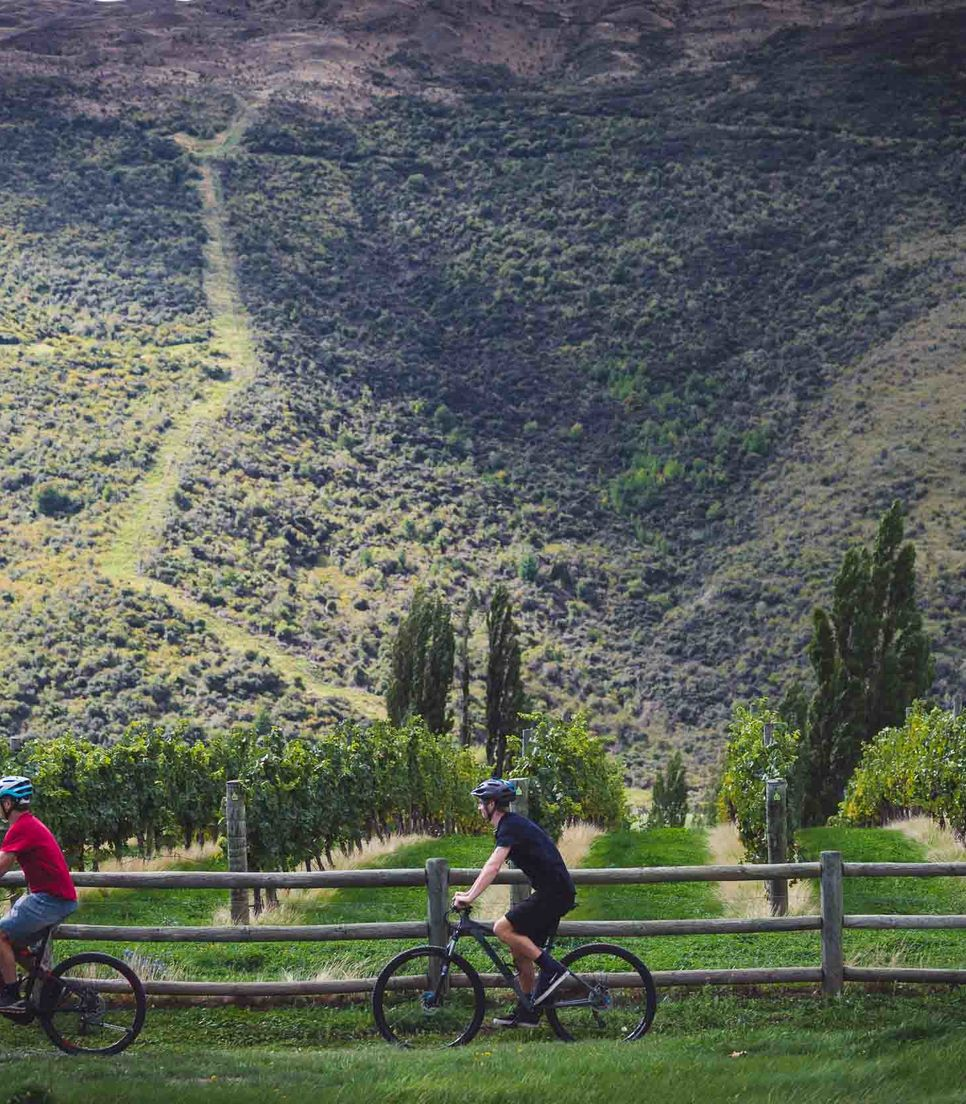 Bike into the heart of the Gibbston Valley and head to a vineyard